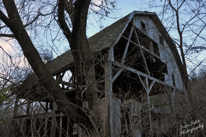 The Beauty in the Broken Barn
