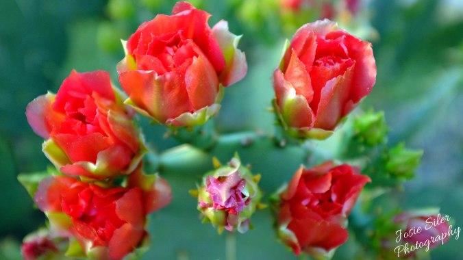 A Cactus Flower Crown