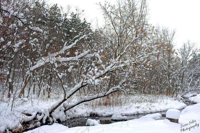 The Snowy Ravine