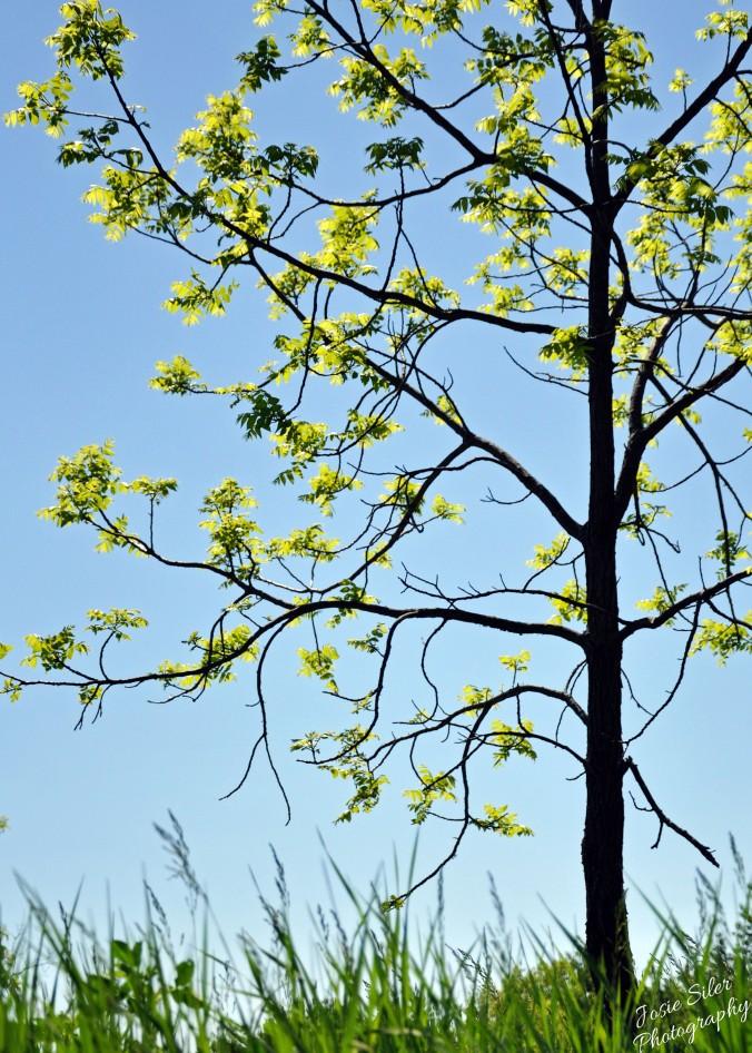 The Tree of Light