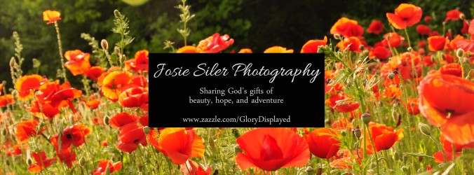 Photography Header - Zazzle